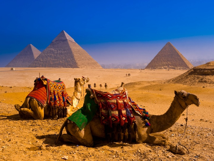 Camels near Great Pyramids of Giza